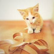 Рыжий котеночек