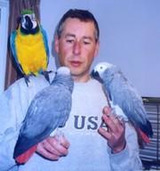 Пара хороших попугаев бесплатно в заботливые дома